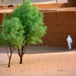 drzewo na pustyni — Zdjęcie stockowe