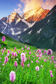 Flowers in the wind, Caucasus Mountains — Stock Photo
