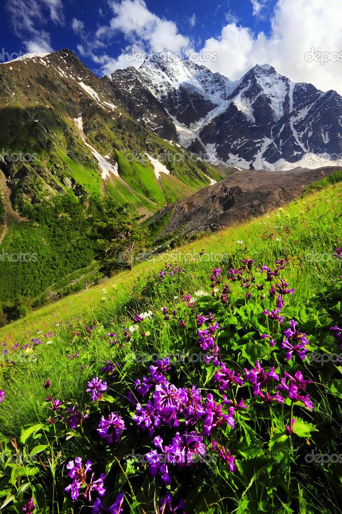 Фото цветы в горах кавказа