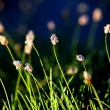 Field grass and flowers — Stock Photo