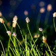 Stock Photo: Field grass and flowers