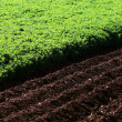 Plowed field — Stock Photo #26100329