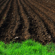 Plowed field — Stock Photo #26100345