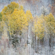 Stock Photo: Late autumn forest landscape