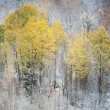 Late autumn forest landscape — Stock Photo