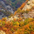 Stock Photo: Mountain autumn landscape in Bucegi Mountains