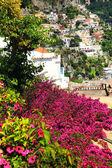 Hermosas flores rojas. en la costa de amalfi positano. — Foto de Stock