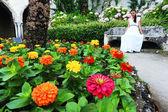 Garden in Ravello, Amalfi Coast — Stock Photo