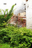 Old wall covered by vegetation — Foto Stock
