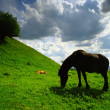 Horse feeding on a meadow — Stock Photo