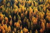 Herbstfarben im hochland — Stockfoto
