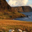 Sheeps and coastline — Stock Photo