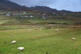 Catlle en la isla de skye — Foto de Stock