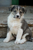 Cute puppy — Stockfoto