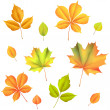 Stock Vector: Autumn leaves isolated on white background.