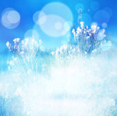 Winter abstract blur background, natural blue wintertime backgro — Stock Photo