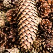 Group of  brown pine cones for backgrounds or textures. Close up — Stock Photo