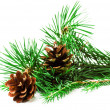 Pine branches with Christmas ornaments on white background. — Stock Photo