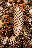 Pile of brown pine cones for backgrounds or textures. — Stock Photo