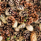 Pile of brown pine cones for backgrounds or textures. Close up — Stock fotografie