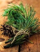 Conifer branch and cone tied with ribbon on wooden — Стоковое фото
