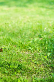 Green spring grass country background — Stock Photo