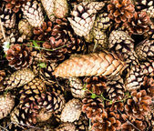 Collection of brown pine cones for backgrounds or textures. — Stock Photo
