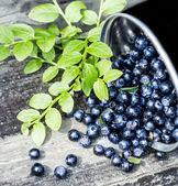 Stora färska blåbär i en skål burk med stora blad på trä gammal rustik vintage bakgrund. — Stockfoto