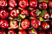 Red Ripe and Shiny Apples — Stock Photo