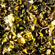 Autumn leaves fall background — Stock Photo