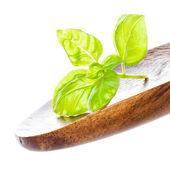 Fresh Sweet Basil leaf on wooden spoon — Stock Photo