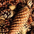 Collection of  brown pine cones for backgrounds or textures — Zdjęcie stockowe