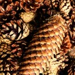 Collection of  brown pine cones for backgrounds or textures — Foto Stock
