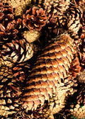 Collection of brown pine cones for backgrounds or textures — Stock Photo