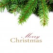 Christmas Fir Tree — Stock Photo #36253953
