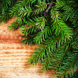 Christmas Tree Branch — Stock Photo #36971005