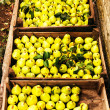 Freshly picked yellow pears in a wooden boxes at a famers market — Stock Photo #38706473