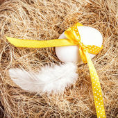 Easter nest with Egg, yellow ribbon and white feather — Photo