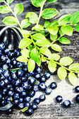 Fresh Blueberry with green leaves in a metal bucket — Stockfoto