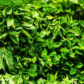 Fresh Herbs Background — Stock Photo