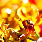 春天的黄色的花朵 — 图库照片