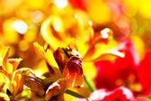 花背景 — 图库照片