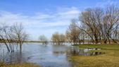 Submerged trees — Stock Photo