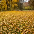 Park in autumn — Stock Photo #36021279
