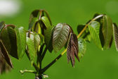 Macro spring leaves — Foto de Stock