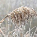Winter has come — Stock Photo
