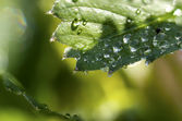 Watter on leaf — Stock Photo