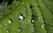 Leaf with drops — Stock Photo