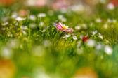 Macro de flores hermosas — Foto de Stock