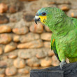 Green yellow parrot — Stock Photo